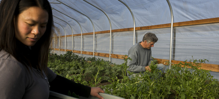 Matt Suhr and Aluna Michelle, owners of HappyDirt Veggie Patch in Medford, Oregon, are dedicated to producing naturally grown, chemical-free food – a few miles from a farm owned by Swiss biotech company Syngenta that grows GMO seed. (photo: Kathryn Boyd-Batstone/Envision)