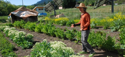 An organic farmer in southern Oregon explains his seed growing technique. (photo: AP)