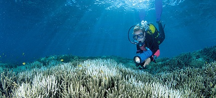 A diver documents bleached coral at the Great Barrier Reef. (photo: OceanWideImages.com)