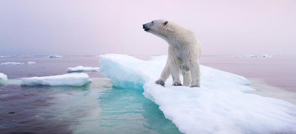 A polar bear stands on an ice floe near Manitoba, Canada, in 2012. Polar bears depend on sea ice, which is forming later in the fall and disappearing earlier in the spring. (photo: Paul Souders/Corbis)
