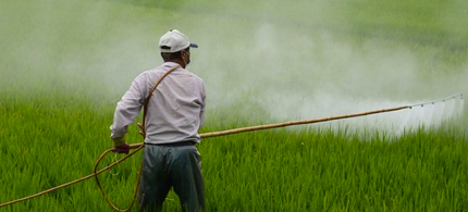 A man sprays a pesticide on plants. (photo: Center for Biological Diversity)