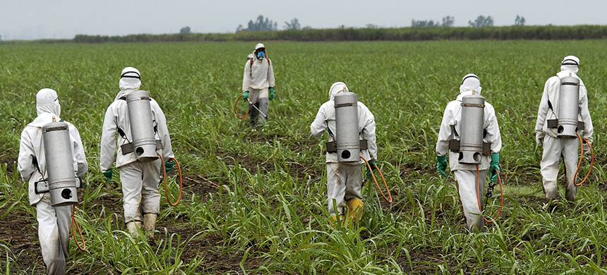 Workers spraying crops. (photo: Getty Images)