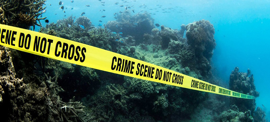 'Divers from coastal communities around the world wrapped crime-scene tape around dead coral reefs.' (photo: Bioquest Studios/EcoWatch)