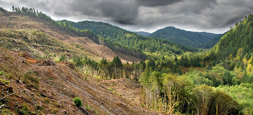 Clear-cut logging operations have already devastated forests in Oregon. This bill will allow even larger areas to be razed for timber production without public comment. (photo: Karin Hilderbrand Lau/Shutterstock)