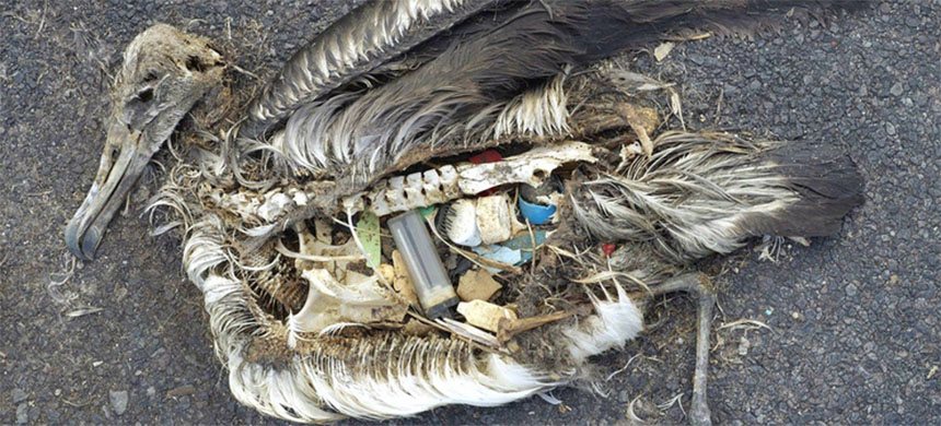 Stomach contents of an albatross chick photographed in the Pacific in 2009. (photo: Chris Jordan/U.S. Fish & Wildlife Service HQ)