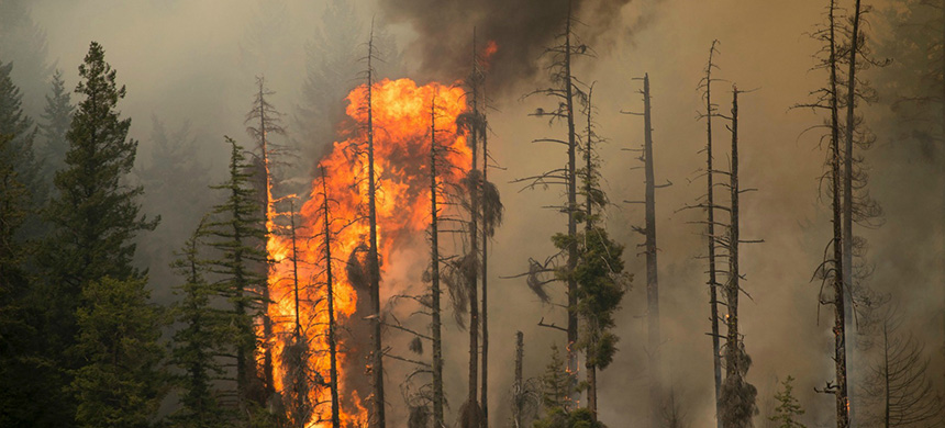 Forest fires. (photo: Reuters/Kari Greer/U.S. Forest Service)