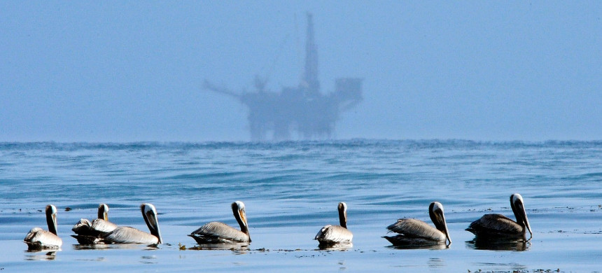In this May 13, 2010 file photo, pelicans float on the water with an offshore oil platform in the background in the Santa Barbara Channel off the coast of Santa Barbara, Calif. (photo: Mark J. Terrill/AP)