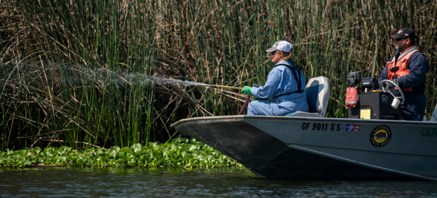 To keep the delta's waterways flowing, the state sprays chemicals that kill invasive plants, including the controversial herbicide known as Roundup. (photo: The Sacramento Bee)
