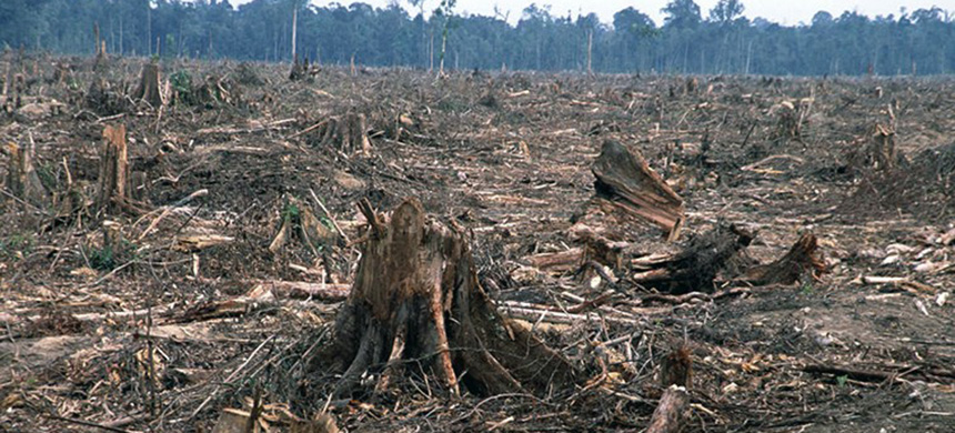 Deforestation. (photo: WWF)
