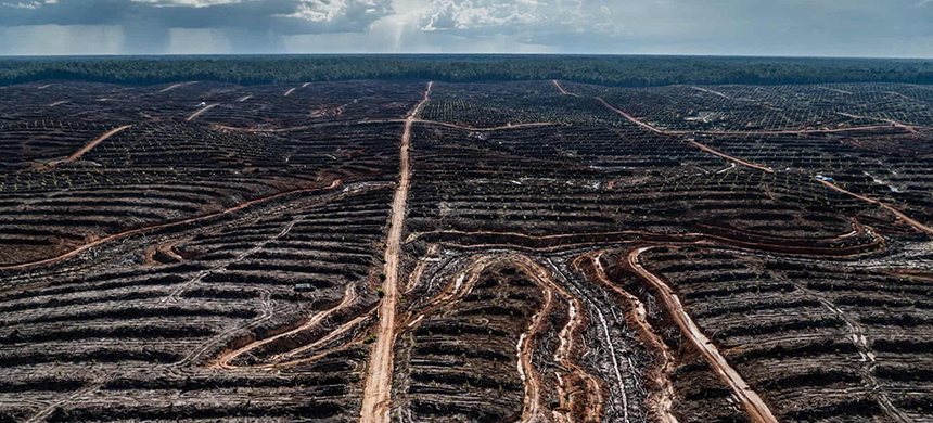 Deforestation in Indonesia. (photo: Ulet Ifansasti/Greenpeace)