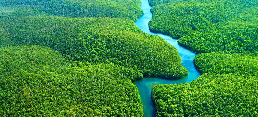 Brazilian Rainforest. (photo: National Geographic)