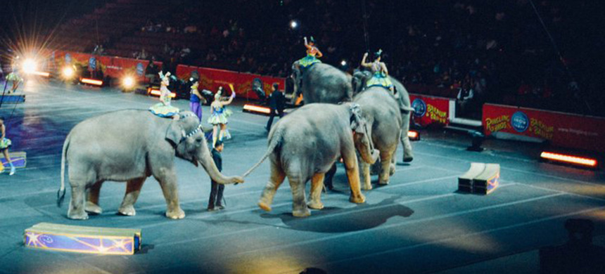 Circus elephants. (photo: Becky Phan)