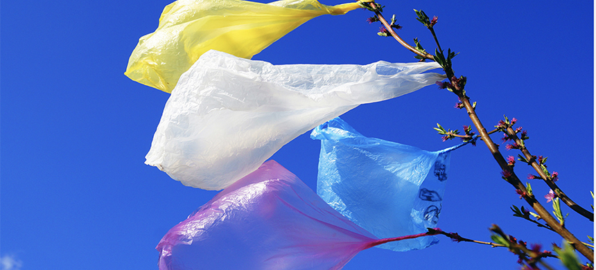 Plastic bags in landfills can be carried by wind and caught in trees. (photo: European Parliament)