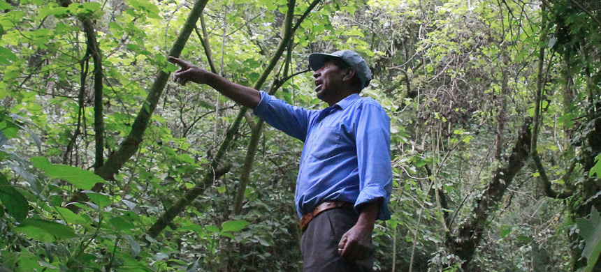 Marcelino Aguilar, head of Concepción Chiquirichapa's Department of Protected Areas, points out a reforested area of Kum Kum Wutz park. (photo: Jorge Rodríguez/Mongabay)