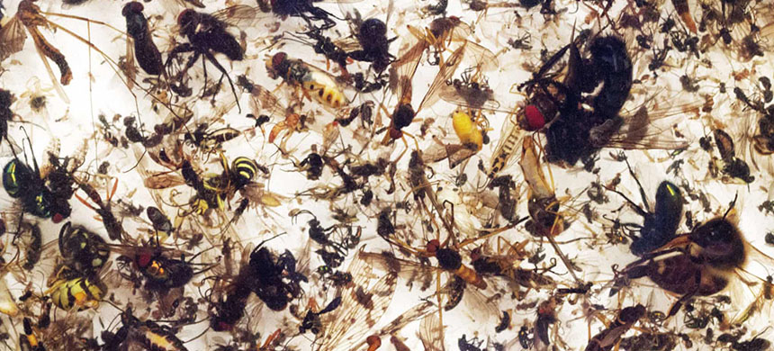 The rate of insect extinction is eight times faster than that of mammals, birds and reptiles. (photo: Verein Krefeld)