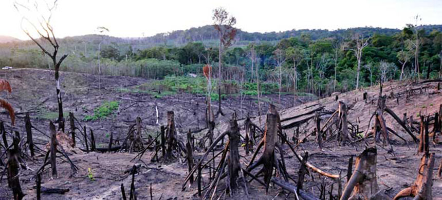 Illegal deforestation in the Awá Indigenous Reserve in Maranhâo state. Forests are illegally cleared by outsiders in preparation for cattle or crops. (photo: Ma´rio Vilela/FUNAI/Mongabay)