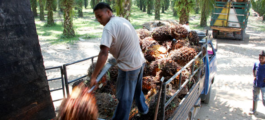 New oil palm plantations are popping up inside Jeanette Kawas National Park almost every week. (photo: TechnoServe)