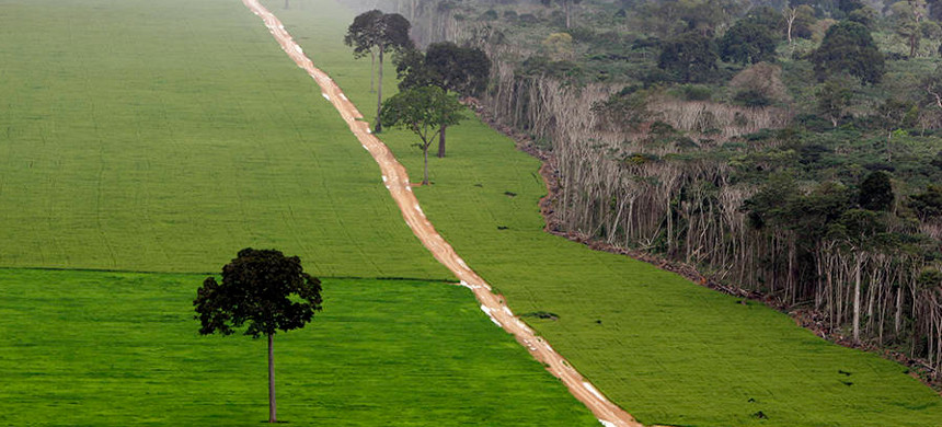Areas of the Brazilian Amazon rainforest have been clear-cut for soybean fields, cattle grazing and infrastructure. (photo: Ricardo Beliel/Getty)