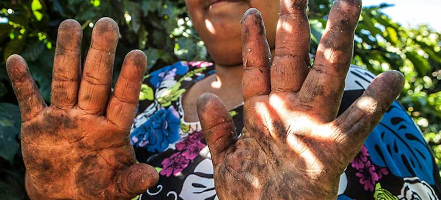 A worker's hands injured by long hours of coffee harvesting. (photo: Lilo Clareto/Reporter Brasil)
