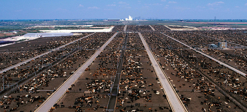 A beef feedlot in Texas. (photo: Design Pics Inc/Alamy)
