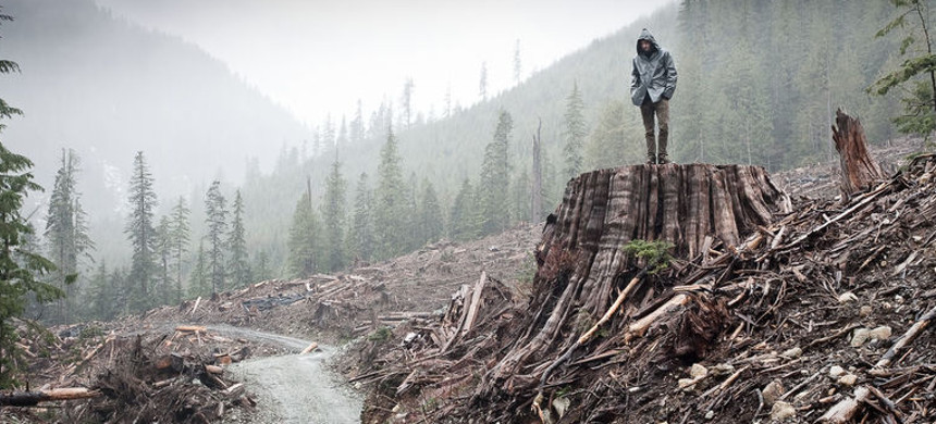 Clear cutting of forest in British Columbia, Canada. (photo: TJ Watt/Ancient Forest Alliance)