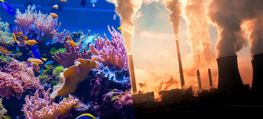 A threat to the reef? (photo: Adobe)