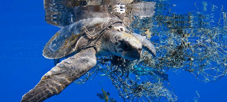 A sea turtle stuck in a net. (photo: Deron Verbeck)