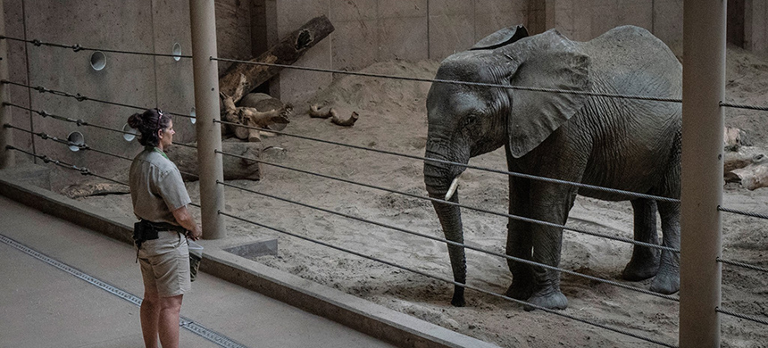 One of the Swazi elephants and a caretaker at the Henry Doorly Zoo and Aquarium in Omaha. (photo: Robin Schwartz/NYT)