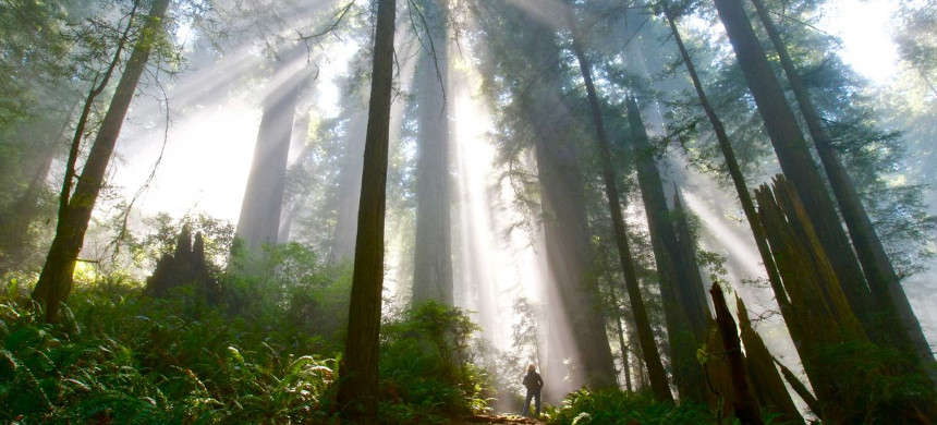 Del Norte Coast Redwoods, California. (photo: iStock)