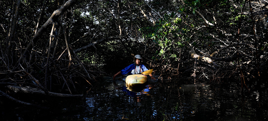 Maggy Hurchalla kayaking near her home in Stuart, Fla., this summer. (photo: Eve Edelheit/NYT)