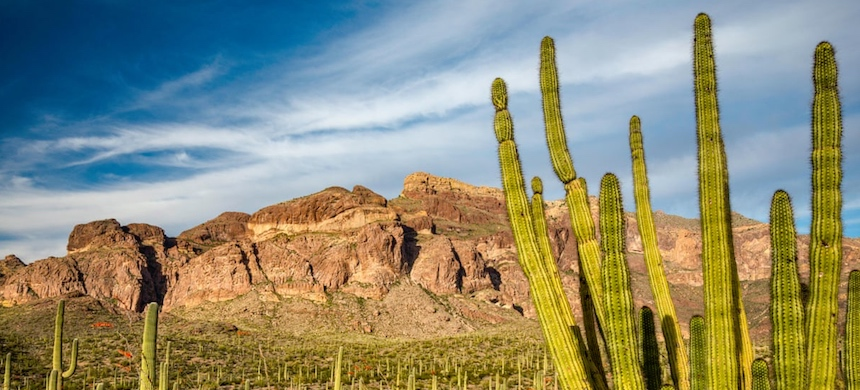 The Organ Pipe Cactus national monument, a federally protected wilderness area and Unesco-recognized international biosphere reserve. (photo: Marek Zuk/Alamy)