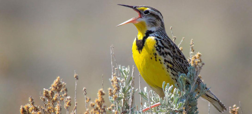 Bird populations are plummeting in North America. (photo: National Geographic)