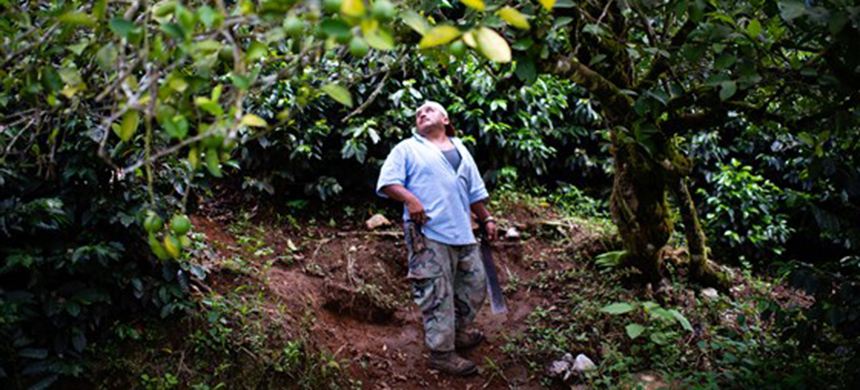 Rodrigo Carrillo Ordonez, 48, walks under a fruit tree on the property filled with his many coffee plants in May. He said he would be going to the U.S. because he cannot make money to provide for himself and his family with his coffee plants. (photo: Sarah L. Voisin /WP/Getty Images)