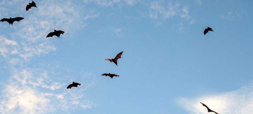 Bats flying. (photo: Vicki Smith/Moment/Getty Images)
