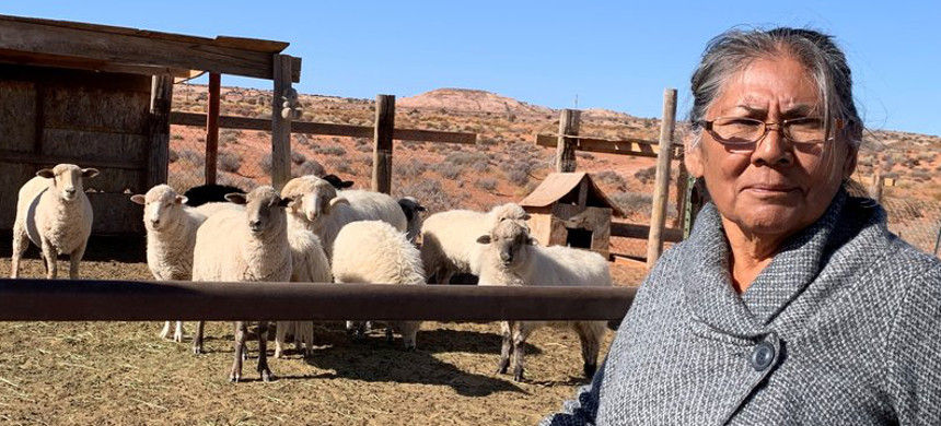 Darlene Yazzie typically hauls water from a windmill 5 miles from her house for her sheep. Officials tell her it's unsafe for humans but OK for livestock. (photo: Laurel Morales/KJZZ)