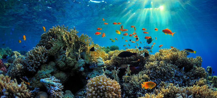 Great Barrier Reef. (photo: iStock)