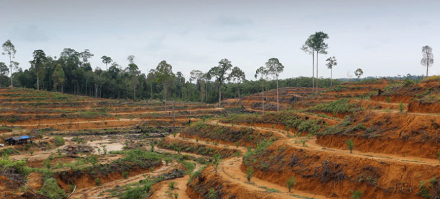 Newly planted oil palm plantation in Aceh, Sumatra, Indonesia. (photo: Rhett A. Butler/Mongabay)