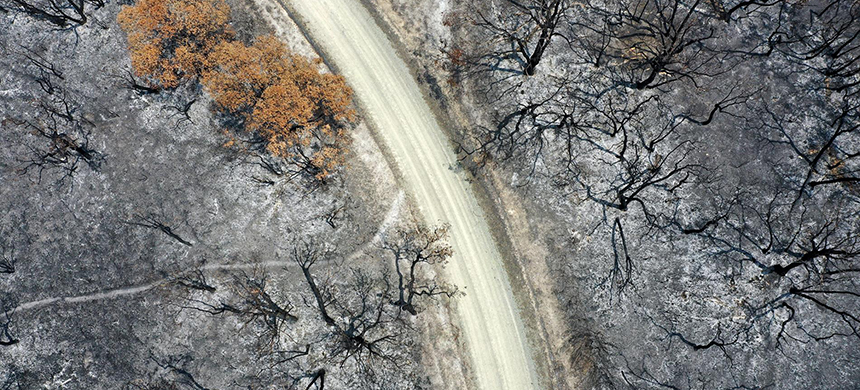 This aerial photograph shows trees scorched in wildfires near Buchan, Australia, on Jan. 9. Some forests will not recover from the wildfires, experts say. (photo: Carla Gottgens/Bloomberg)