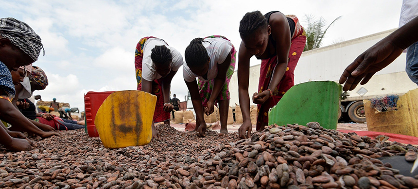 Women sort cocoa beans in Abidjan, Ivory Coast. (photo: Sia Kambou/AFP/Getty Images)
