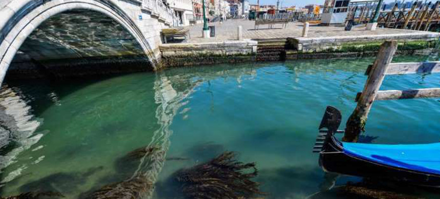 Seaweed can be seen in clear waters in Venice as a result of the stoppage of motorboat traffic. (photo: Andrea Pattaro/AFP)