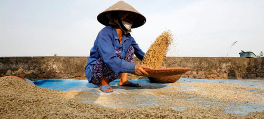 Vietnam, the third biggest rice exporter, has suspended contracts in the wake of the crisis. (photo: Nguyen Huy Kham/Reuters)