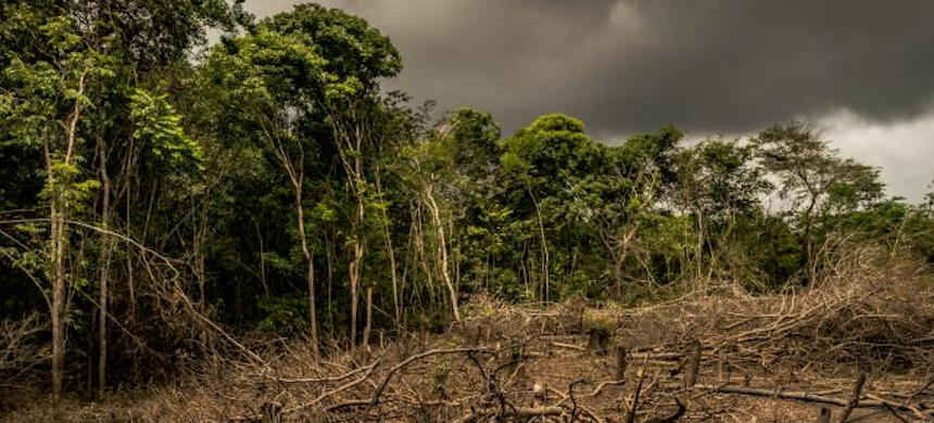 'Stopping deforestation will not only reduce our exposure to new disasters but also tamp down the spread of a long list of other vicious diseases that have come from rain forest habitats.' (photo: Luis Barreto/WWF)
