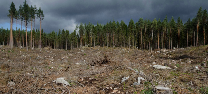 Destruction of forests and other wilderness spaces increase the risks of global pandemics. (photo: Tero Laakso)