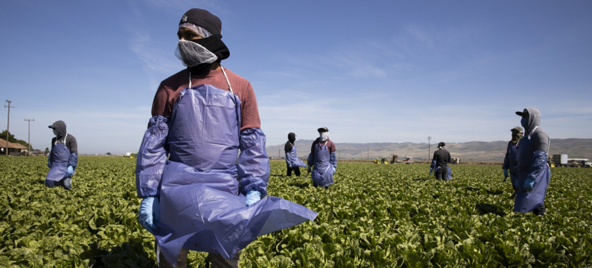 Farm laborers from Fresh Harvest working with an H-2A visa maintain a safe distance as a machine is moved on April 27, 2020, in Greenfield, California. (photo: Brent Stirton/Getty)