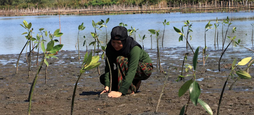 Residents plant mangroves on the coast of West Aceh District in Indonesia on Feb. 21, 2020. Mangroves play a crucial role in stabilizing the coastline, providing protection from storms, waves and tidal erosion. (photo: Dekyon Eon/Opn Images/Barcroft Media/Getty Images)
