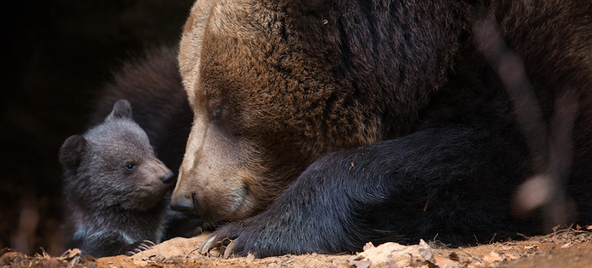 A mother bear and her cub. (photo: istock)
