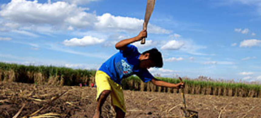 An 11-year-old boy chops sugarcane stalks in a Bolivian village. (photo: Noah Friedman-Rudovsky/Time)