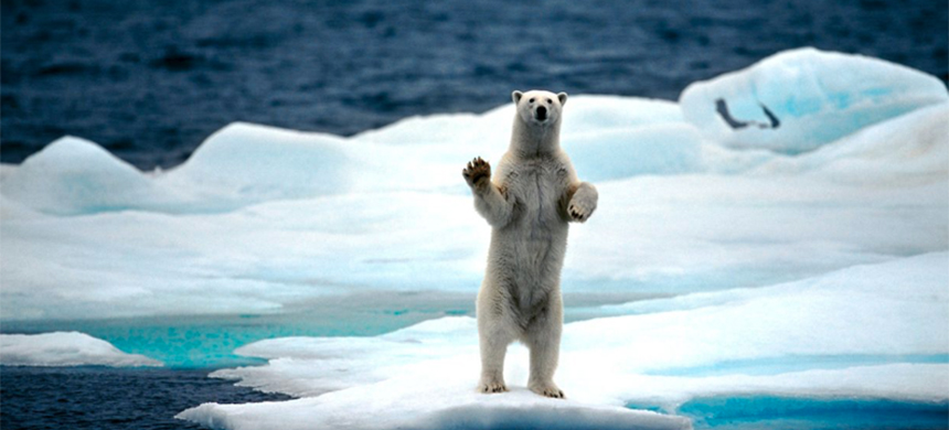 A polar bear stands on sea ice on the North Pole. (photo: Arterra/Universal Images Group/Getty Images)