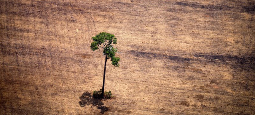 A tree in a deforested area in the middle of the Amazon. Scientists are discovering a strong correlation between deforestation and disease outbreaks. (photo: Raphael Alves/AFP/Getty Images)