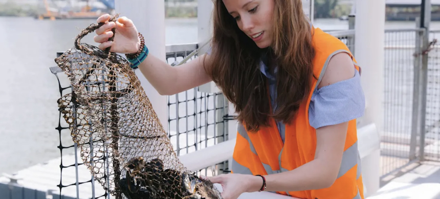 UQ study lead Francisca Ribeiro inspects oysters. The study of five different seafoods revealed plastic in every sample. (photo: University of Queensland)
